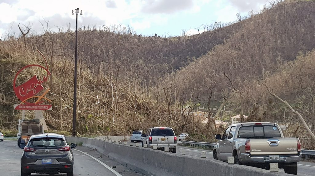 Hurricane María damaged more 95% of the flora, leaving almost no trees with leaves. Photo by Ismael Pagán-Trinidad.